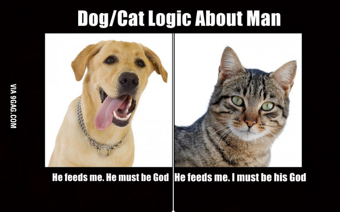 How is a dog different than a cat?
