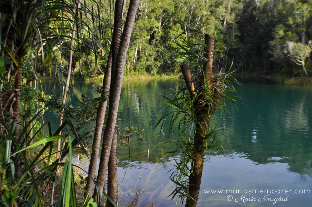 Lake Eacham, sjö i Atherton Tablelands, Queensland, Australien