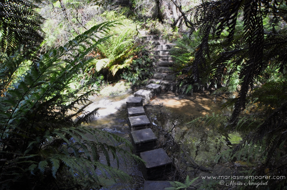 Lillian's Glen, Nature Track, Blue Mountains, NSW Australia / vandringsled i Blue Mountains, Australien
