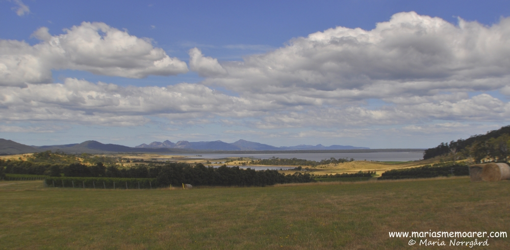 View from winery at Devil's Corner, Tasmania