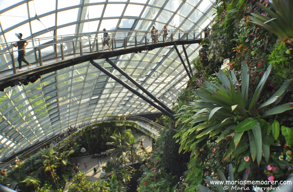 fotoutmaning - uppifrån - Gardens by the Bay Cloud Forest Dome Singapore