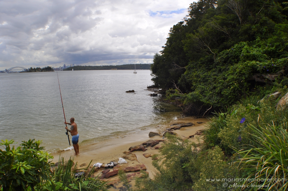 fishing on hermitage foreshore walk, Sydney / fisketur på hermitage foreshore track