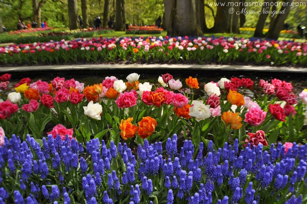 färgglada Keukenhof i Holland / colorful Keukenhof in the Netherlands