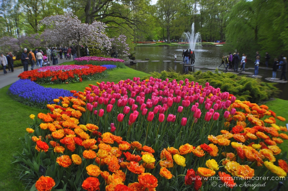 Keukenhof, Lisse, Holland, Netherlands