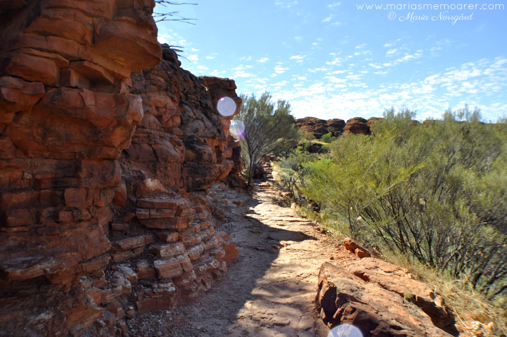 Kings Canyon Rim Walk, walking track