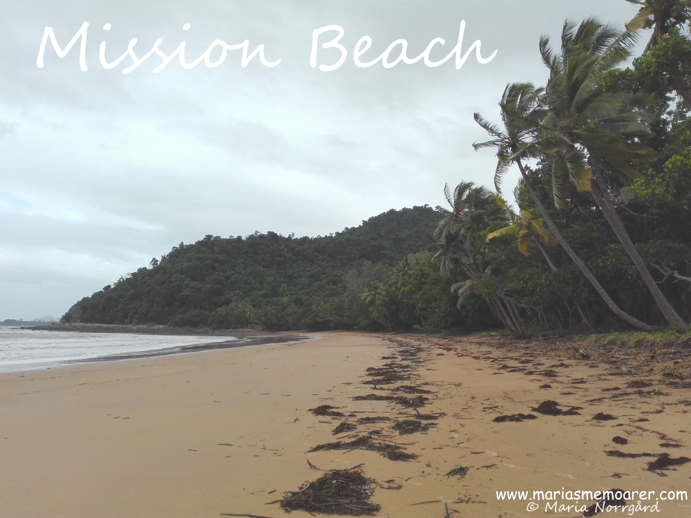 Bingil Bay Beach in Mission Beach, Queensland, Australia / tropisk strand i Mission Beach, Australien