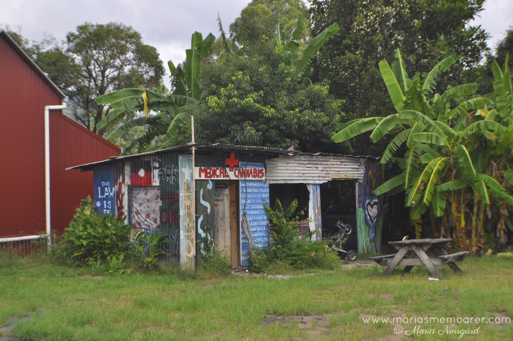 Medical cannabis shed in Nimbin, New South Wales