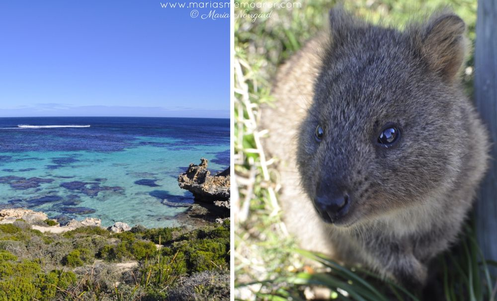 Islands near Perth in Western Australia - Rottnest Island