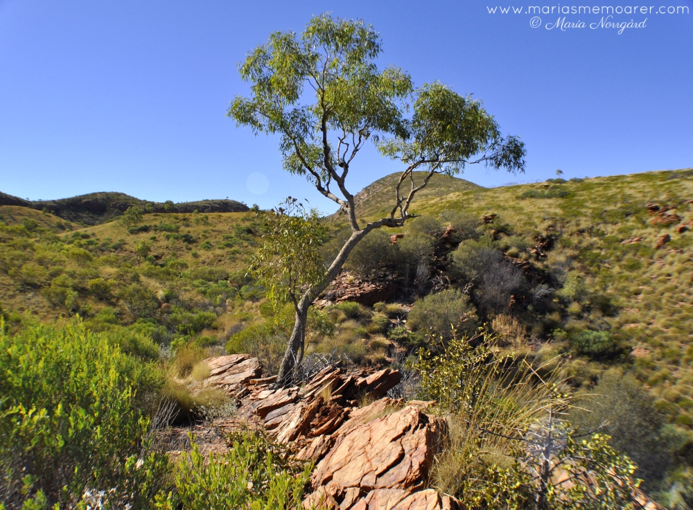 West MacDonnell Ranges, Australia, hiking