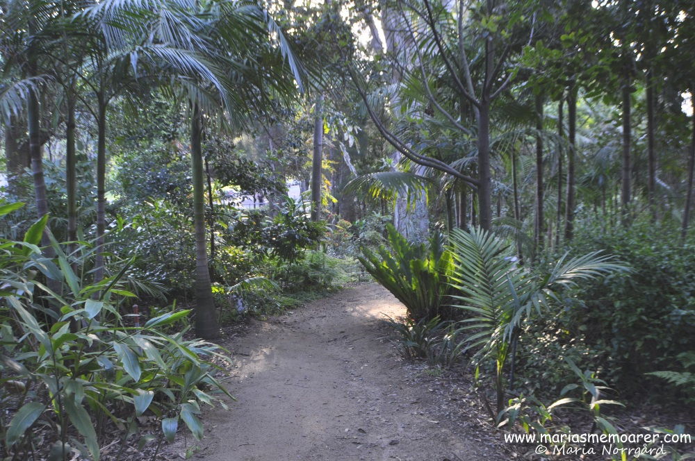 Royal Botanic Gardens with rainforest, Melbourne, Australia