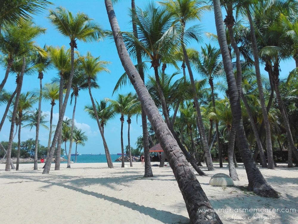 Siloso Beach lined with palm trees - Sentosa Island, Singapore / Siloso Beach kantad av palmer
