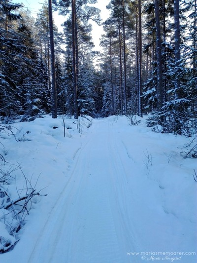 forest walk during winter, Finland