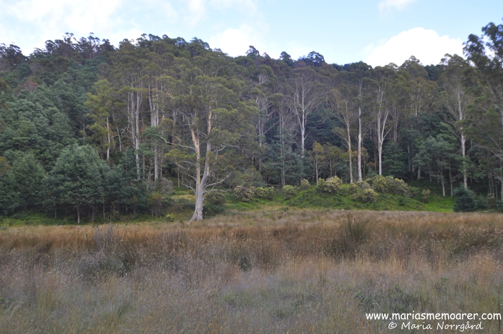 Wilderness near Liffey River, Tasmania