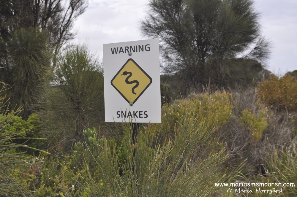 warning sign snakes, Great Ocean Road / varningsskylt för orm, Australien