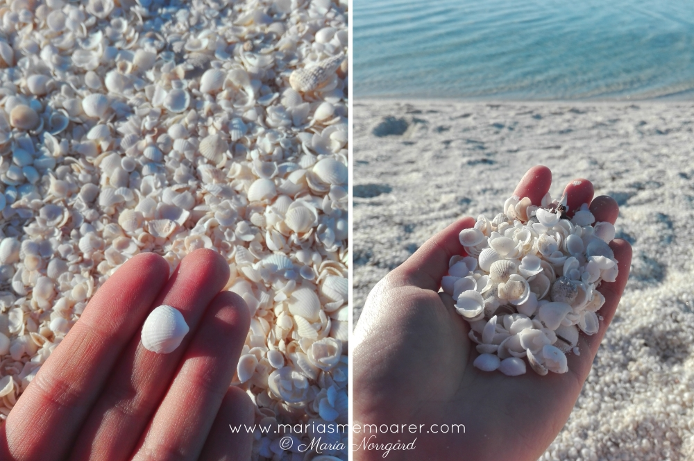 Shell Beach Conservation Park - a beach with only sea shells