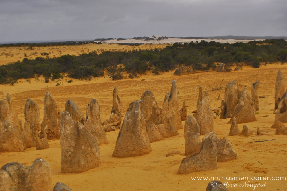 must see Australia / sevärt i Australien: The Pinnacles (desert / öken)