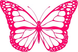 the butterfly project drawing pink white