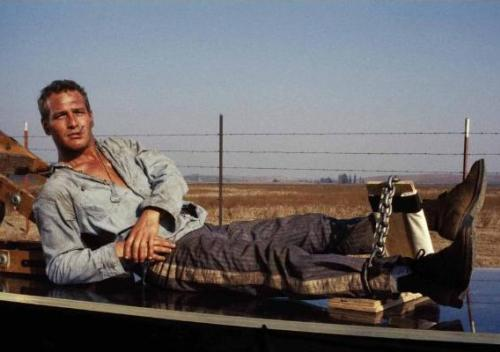 Paul Newman som Cool Hand Luke