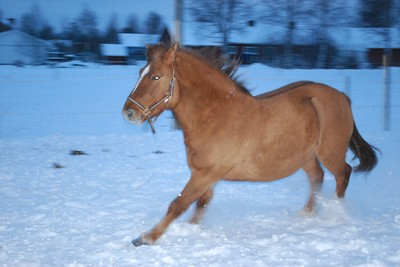 Full galopp i hagen. Dec 2009