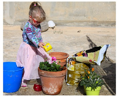 Young girl watering and planting spring flowers, african daisy, geranium, malta
