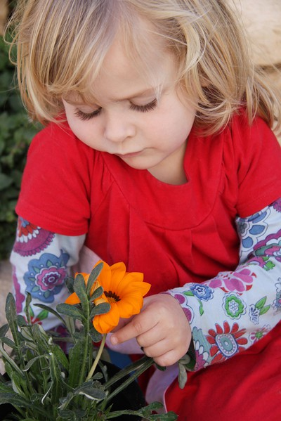 Young girl looking at a African Daisy, Latin name Ostopermum