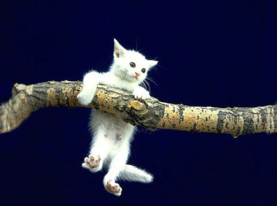 Hang in there kittie!