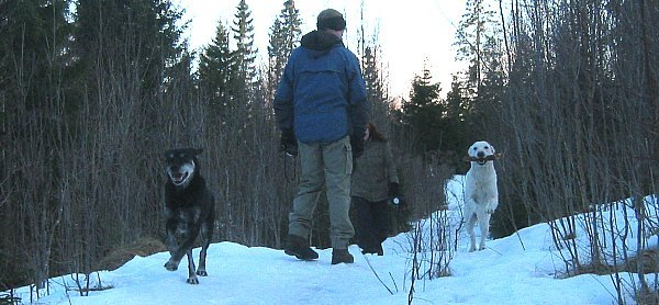 Freja and Fylgia running in forest