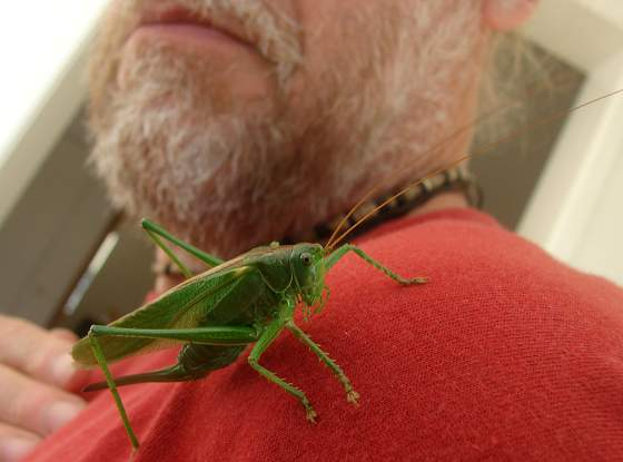 Grasshopper close encounter
