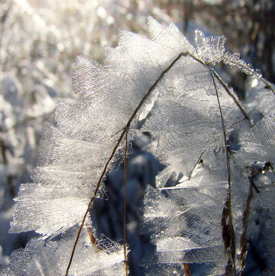 Ice crystals on grass