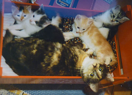 Siri and kittens 1995