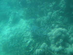 Grey Barrier Reef