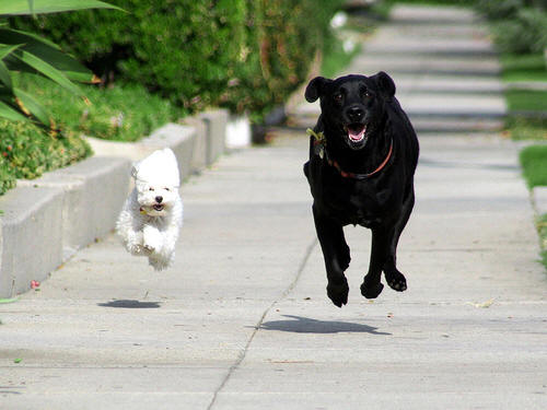 Two dogs runing